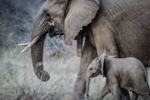 What Elephants Can Teach Us About Healthy Families